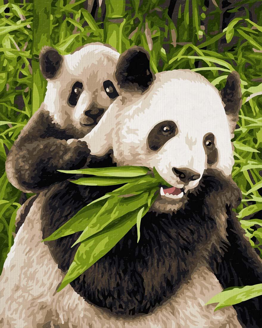 malen nach zahlen  pandabären  609240712 schipper kids